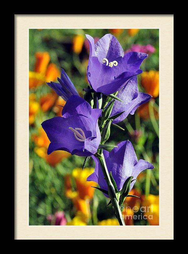 Gary Whitton - Purple Harebell Flowers Print