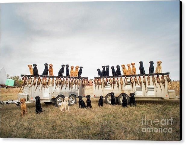 Chip Laughton - Pheasant Hunting Stock Ph... Print