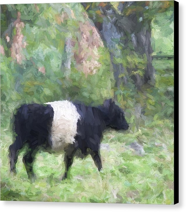 Carol Leigh - Belted Galloway Cow Paint... Print