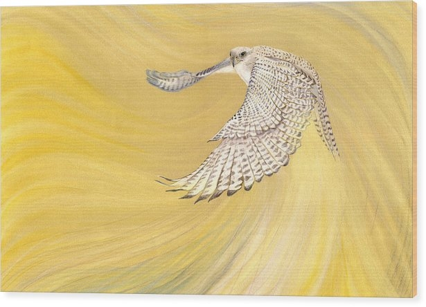 Robin Aisha Landsong - Gyrfalcon Gliding into th... Print