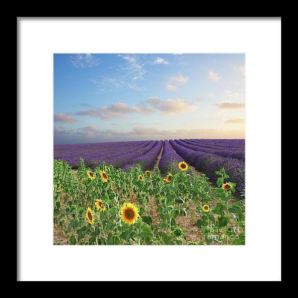 Anastasy Yarmolovich - Lavender and Sunflower Fl... Print