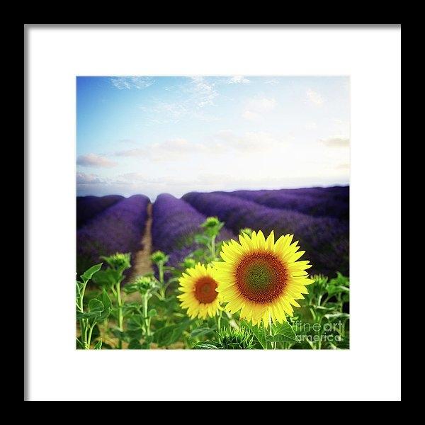 Anastasy Yarmolovich - Sunrise over Sunflower an... Print