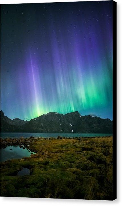 Tor-Ivar Naess - Purple Rain Print