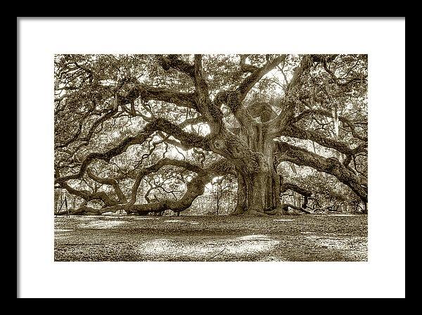 Dustin K Ryan - Angel Oak Live Oak Tree Print