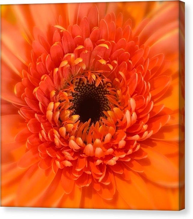 Wonju H -  Orange Gerbera daisy  Print