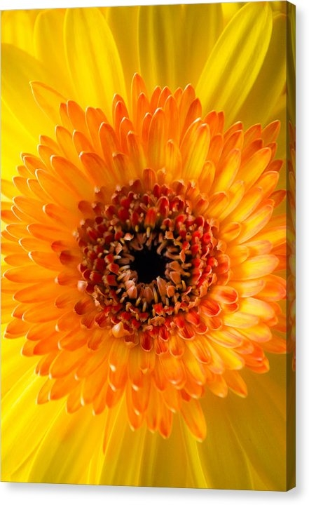 Shelby  Young - Burst of Sunshine Print