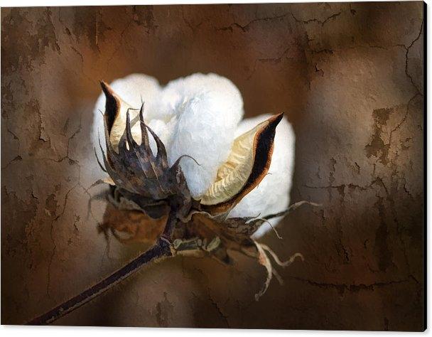 Kathy Clark - Them Cotton Bolls Print