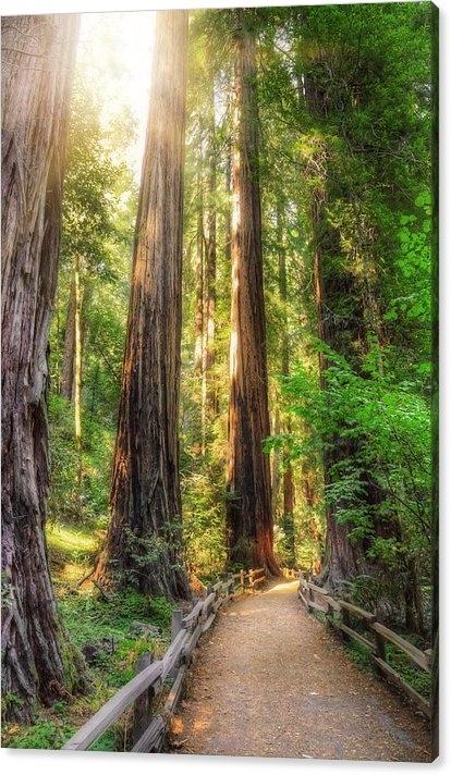 Jennifer Rondinelli Reilly - Fine Art Photography - Muir Woods Forest Path an... Print