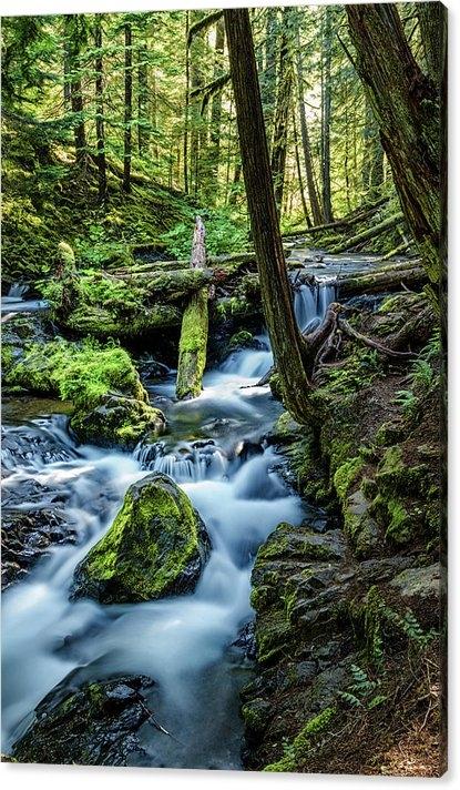 Janet Ballard - Waterfall Woods Print