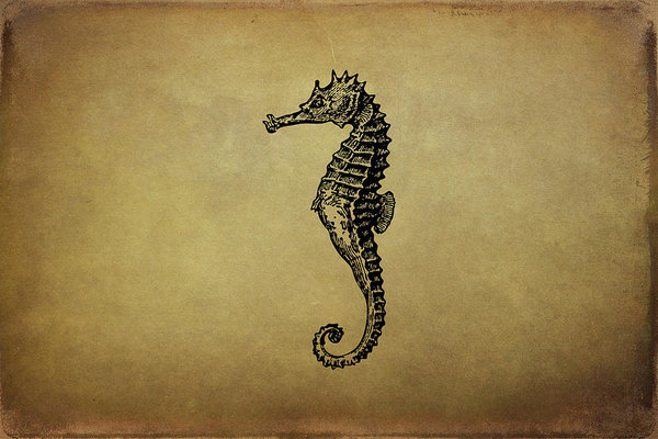 Peggy Collins - Vintage Seahorse Illustra... Print