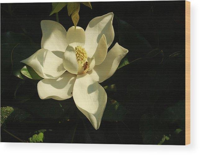 Ronald Olivier - Louisiana Magnolia Print