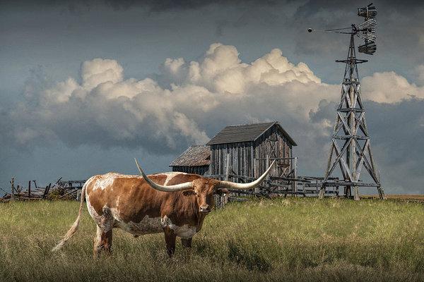Randall Nyhof - Longhorn Steer in a Prair... Print