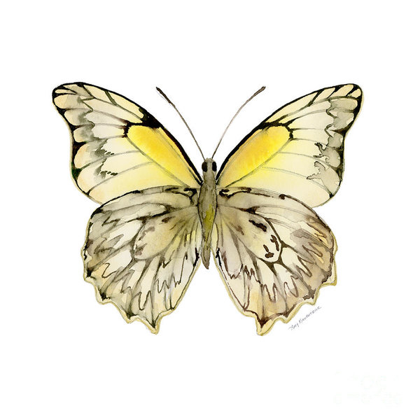 Amy Kirkpatrick - 44 Hesperocharia Graphite Print