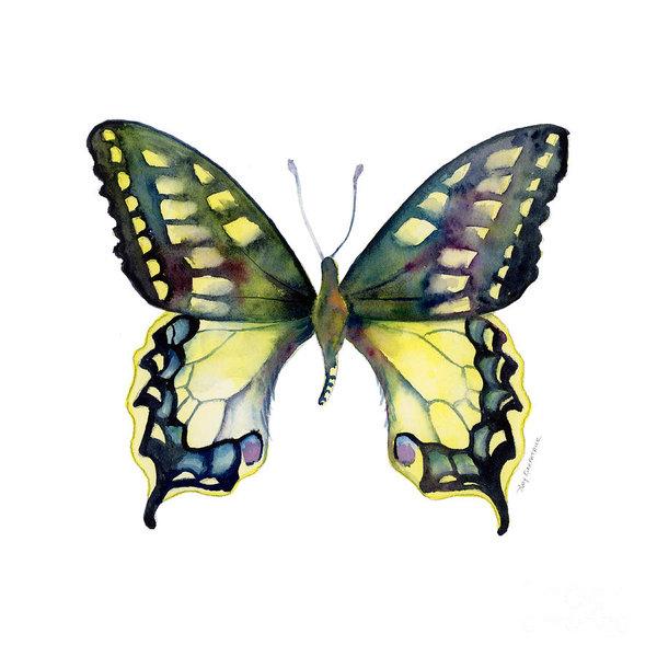 Amy Kirkpatrick - 20 Old World Swallowtail ... Print