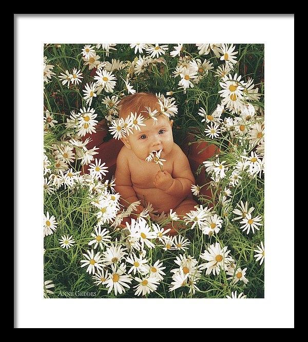 Anne Geddes - Daisies Print
