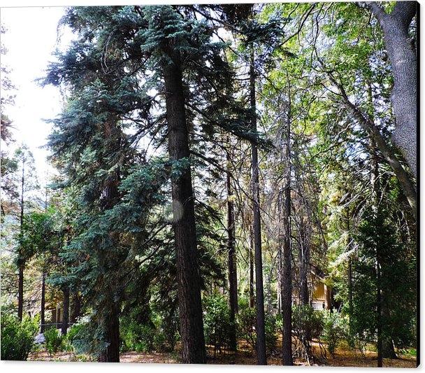 Roberts Photography - Lake Arrowhead Forest Print