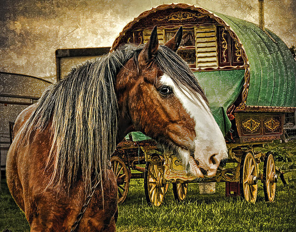 Brian Tarr - The Gypsy Vanner Print