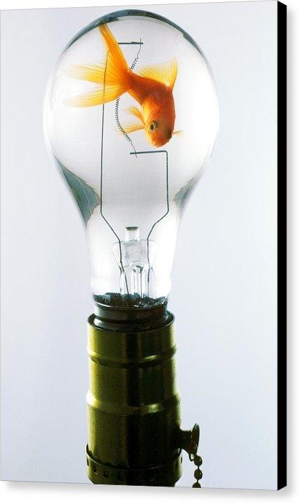Garry Gay - Goldfish in light bulb  Print