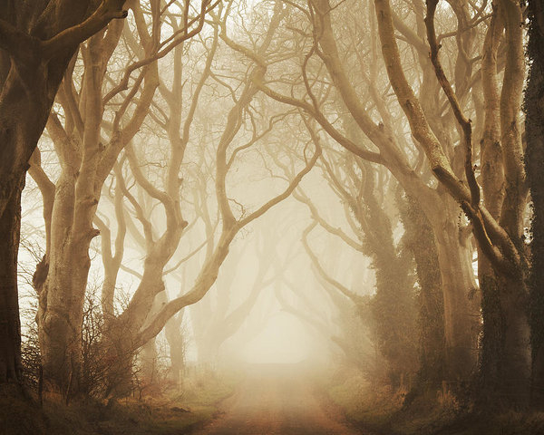 Maggy Morrissey - The Dark Hedges Print