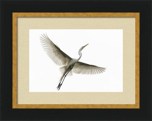 Linda Dyer Kennedy - In Flight III Print