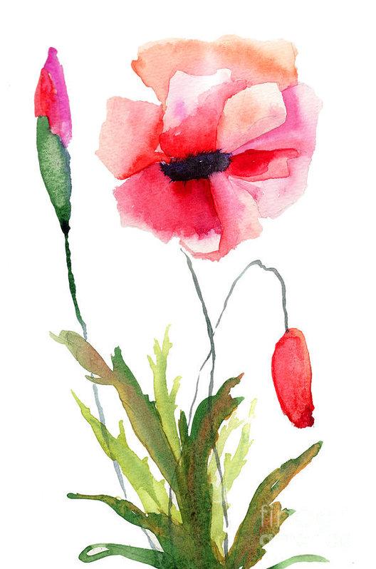 Regina Jershova - Colorful poppy flowers Print