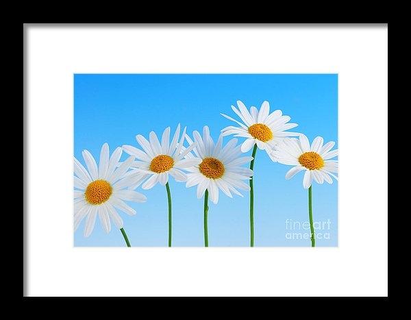 Elena Elisseeva - Daisy flowers on blue Print