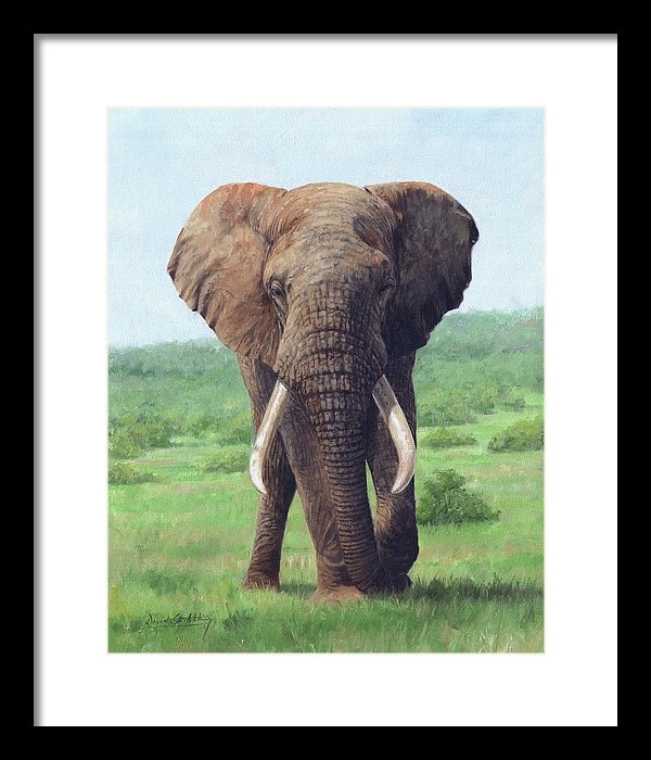 David Stribbling - African Elephant Print