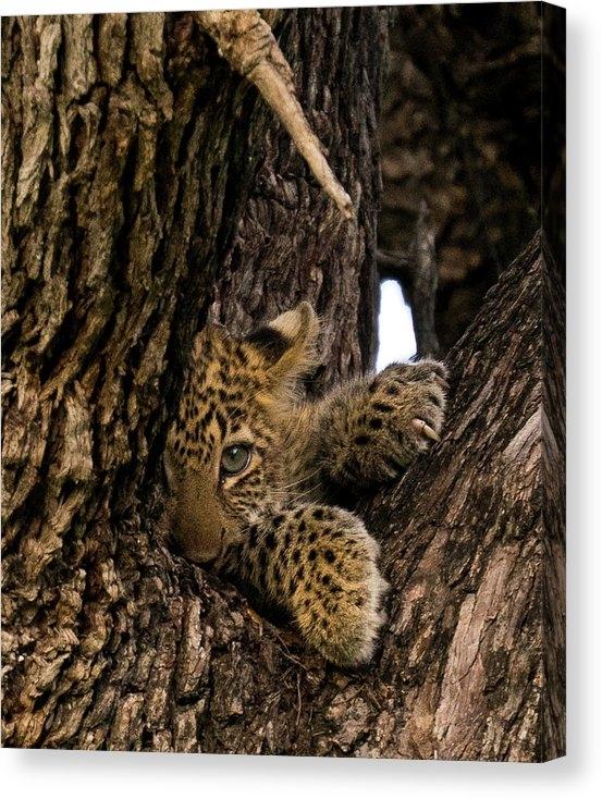 Alex Sardanis - Leopard Cub Print