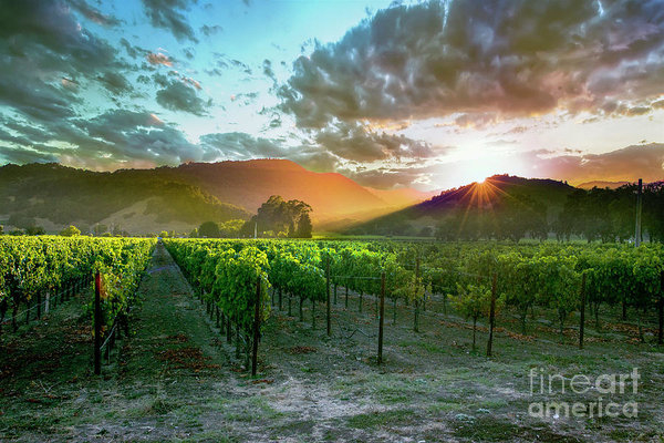 Jon Neidert - Wine Country Print