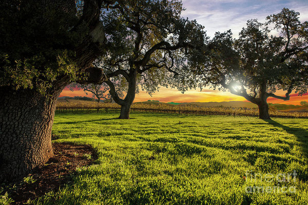 Jon Neidert - Morning in Wine Country Print