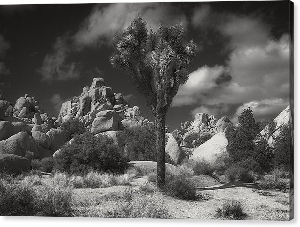 Sandra Selle Rodriguez - Joshua Tree National Park Print