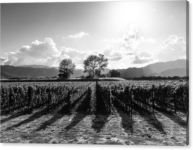 Paul Scolieri - Napa Vineyard B/W Print