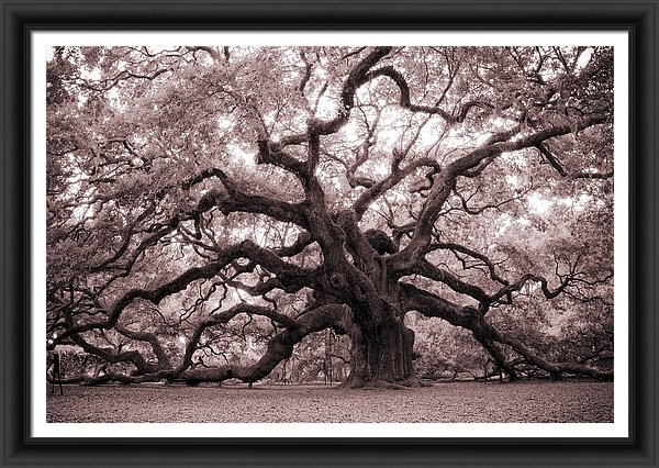 Dustin K Ryan - Angel Oak Tree Print