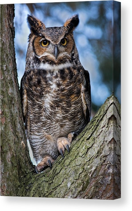 Dale Kincaid - Great Horned Owl Print