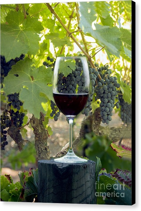 Jon Neidert - Beautiful Cabernet Print