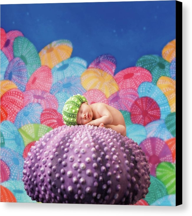 Anne Geddes - Vince as a Sea Urchin Print