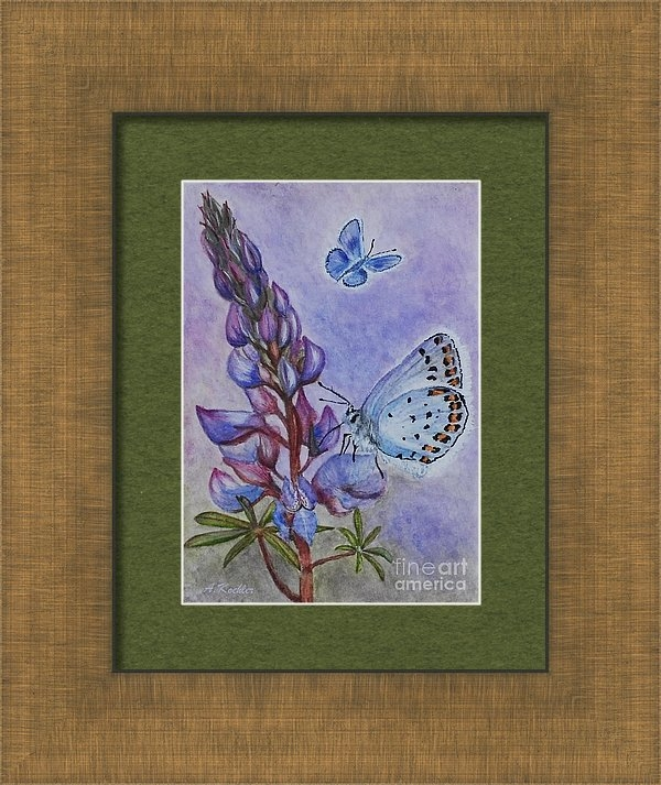 Angela Koehler - Karner Blue And Wild Lupi... Print