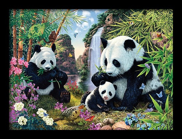Steve Read - Panda Valley Print