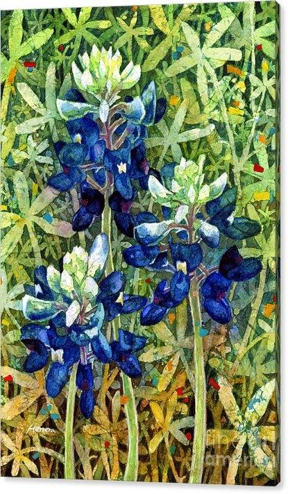 Hailey E Herrera - Garden Jewels I Print