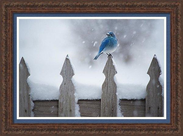 Scott Wheeler - Snowbird Print