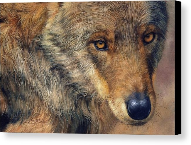 David Stribbling - Portrait of a Wolf Print