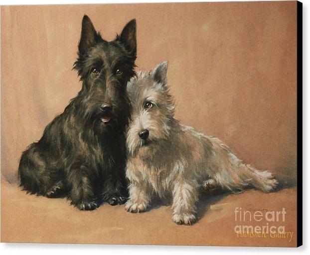 Christopher Gifford Ambler - Scottish Terrier Print