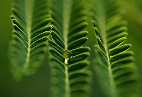 Michelle Meenawong -  A Green Drop
