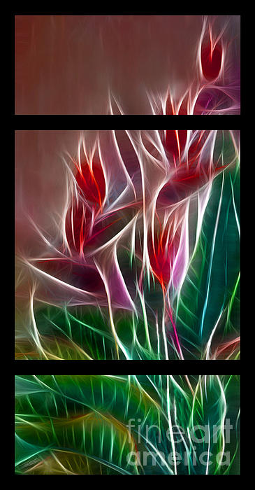 Peter Piatt - Bird of Paradise Fractal