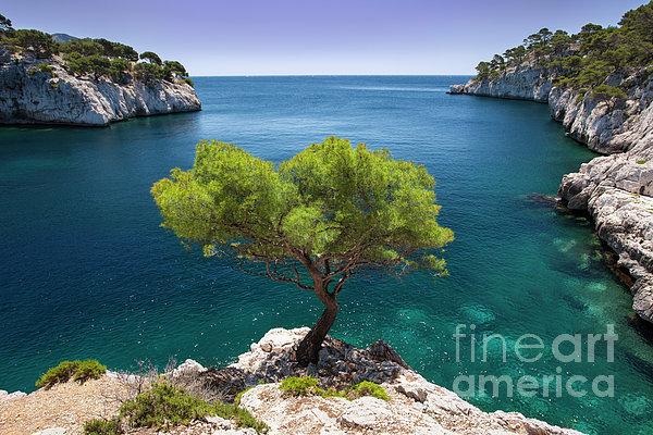 Brian Jannsen - Lone Pine Tree