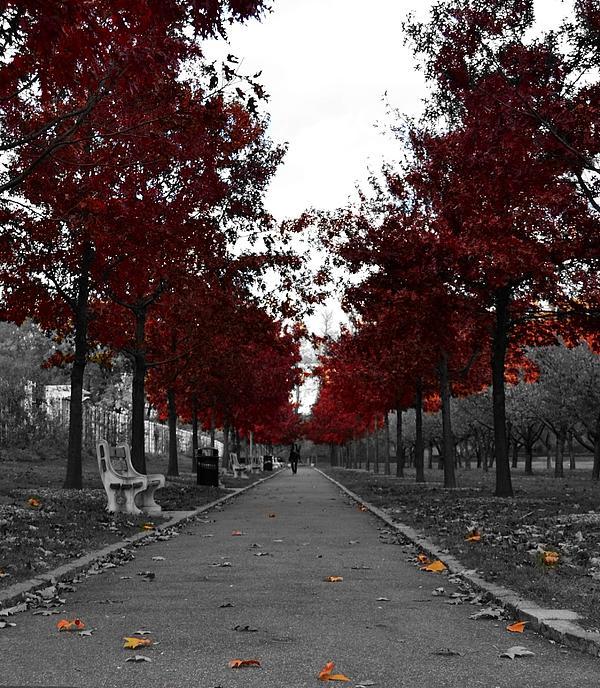 Lydia Marrero - Red Lane