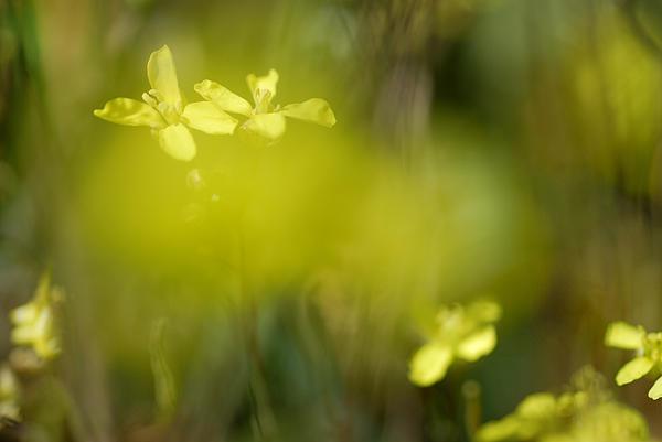 Guido Montanes Castillo - Yellow Dream