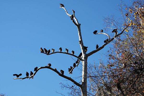 Christiane Schulze Art And Photography - Birds