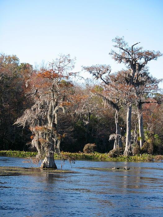 Christiane Schulze Art And Photography - Florida Swamp