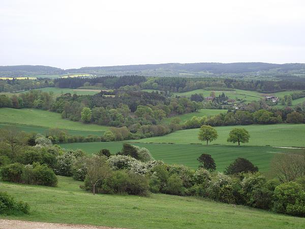 Jayne Wilson - Green and Pleasant Land